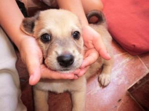 This little puppy is one of the many that have been cared for at Isla Animals