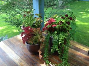 Summer Plants, coleus, planters, porch